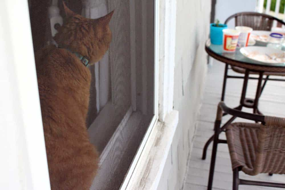 Orange tabby cat perched on a window sill.
