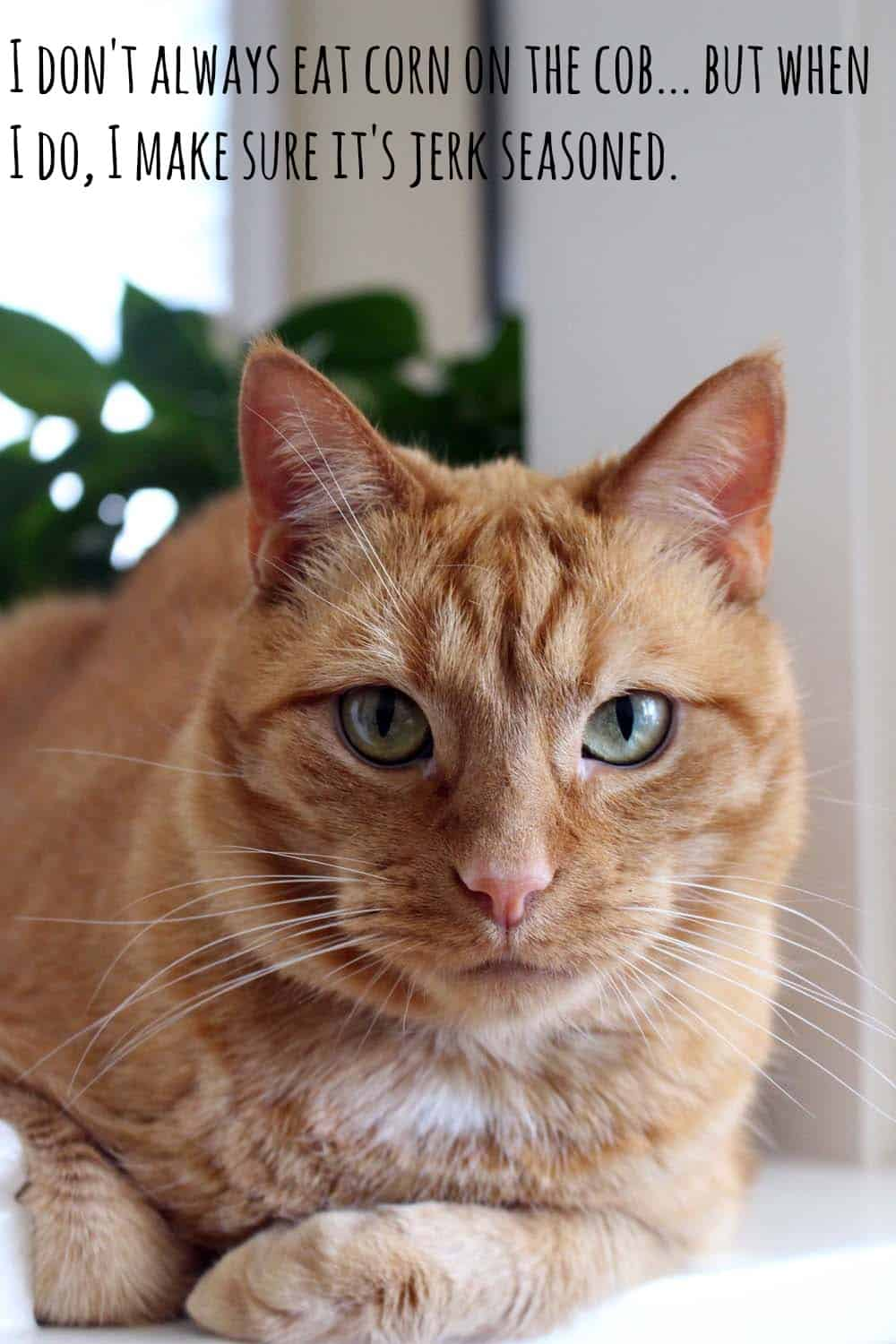 """Orange tabby cat looking at the camera with overlaid text that says """"I don't always eat corn on the cob, but when I do, I make sure it's jerk seasoned."""""""