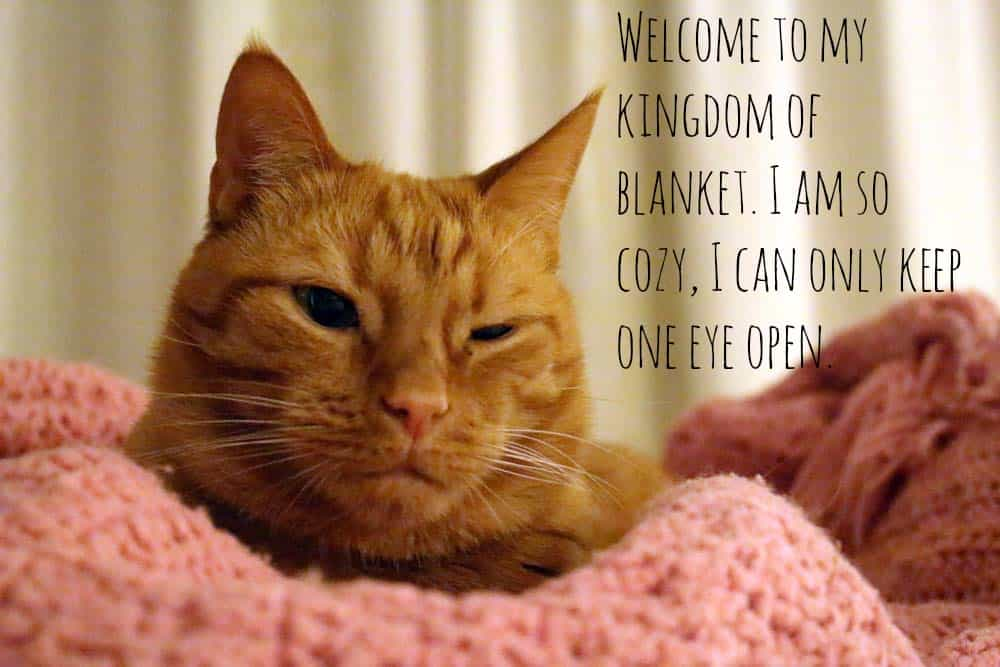 "Orange tabby cat looking at the camera with eyes partially closed, with overlaid text that reads, ""Welcome to my kingdom of blanket. I am so cozy I can only keep one eye open."""