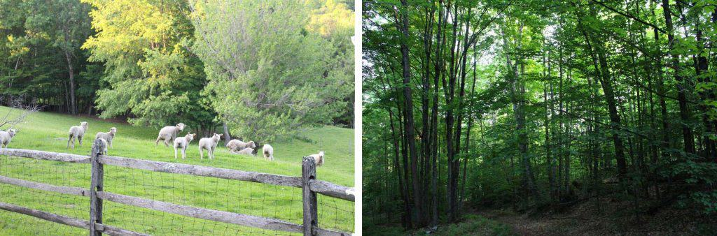 Two photos, the one on the left is of sheep in a green pasture, and the one on the right is of a forest.