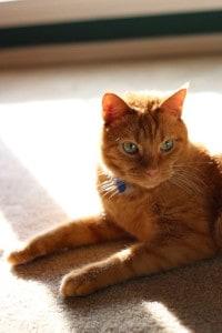 Oscar in a sunbeam