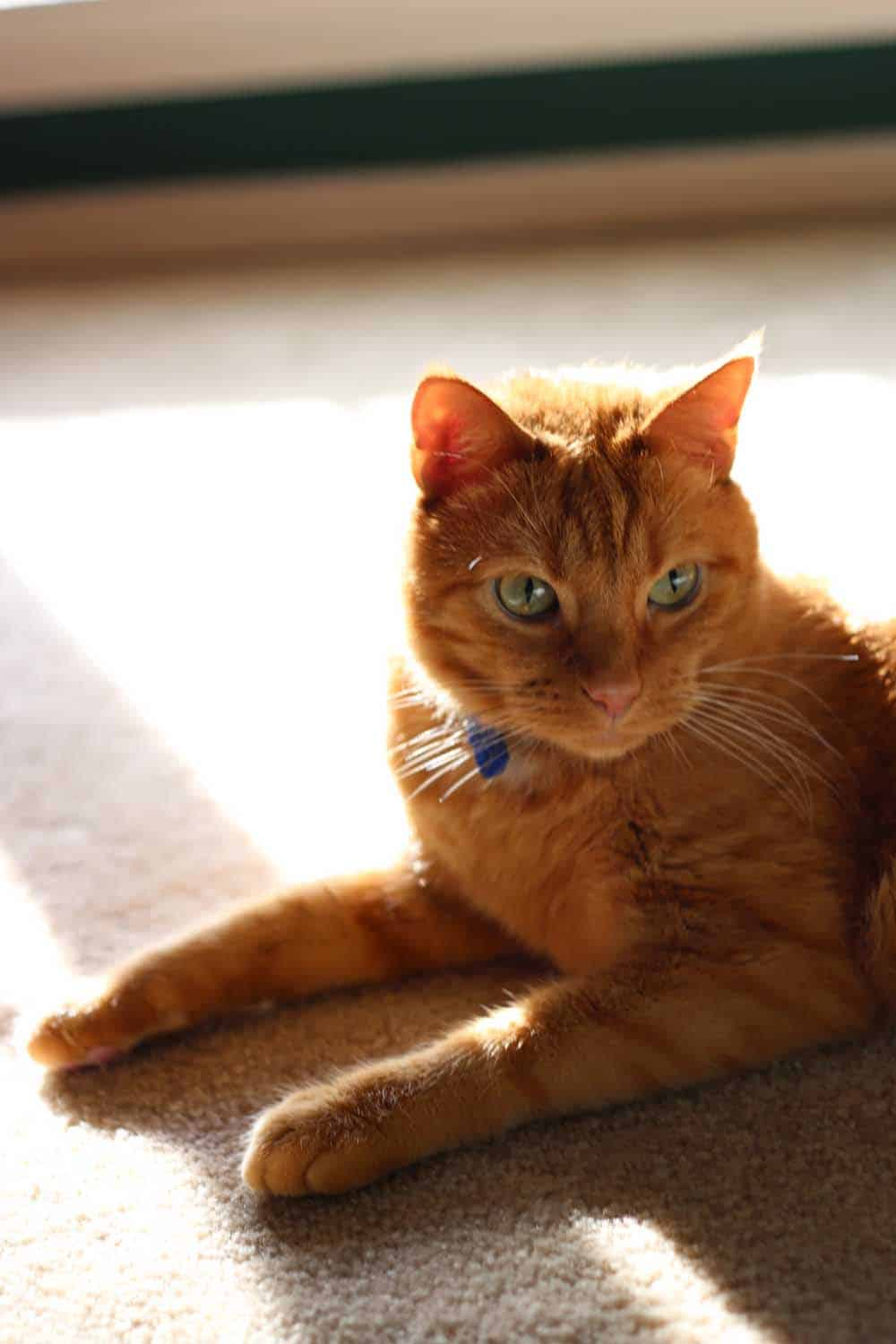 Oscar in a sunbeam