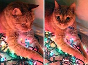 Oscar and the Christmas Lights