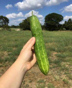 Homegrown Cucumber copy